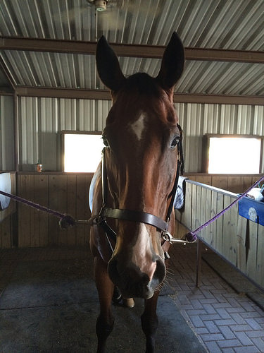 """His sweet, """"glad you are here!"""" pre-ride face."""