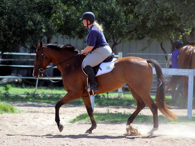 Chomp chomp angry horse