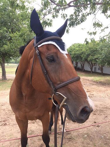 Mah hat!