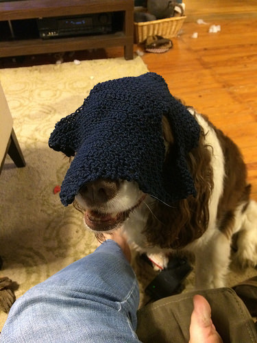 When horses aren't available, try a spaniel