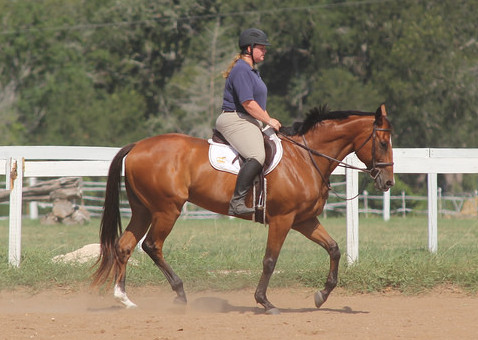 """I call this """"happy sitting trot"""""""