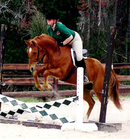 Schooling at our first real hunter/jumper farm