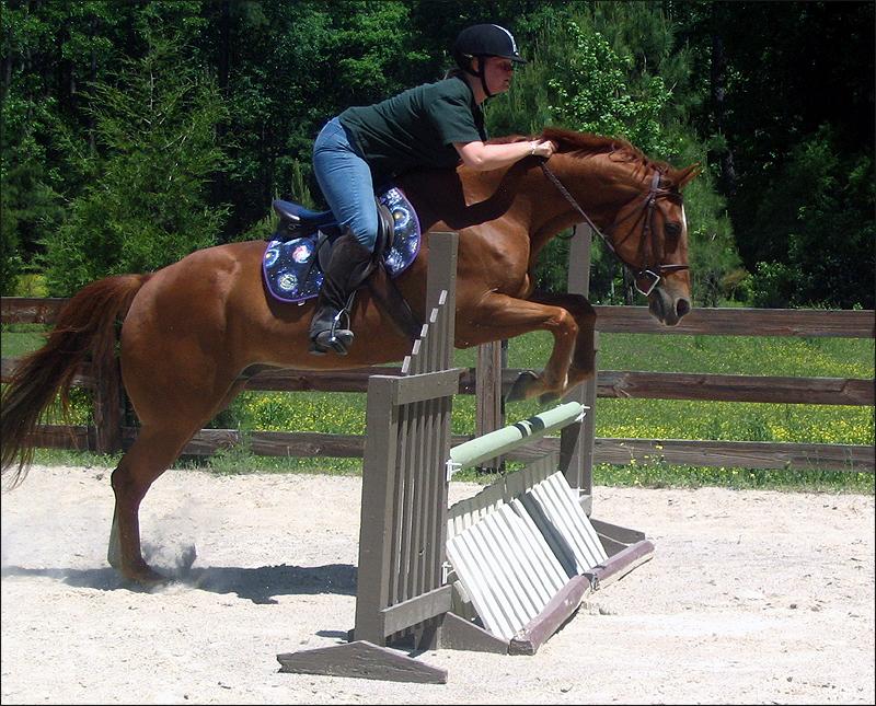"Cutest 2'3"" Horse ever"