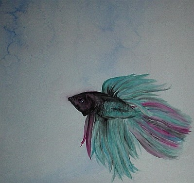 Betta fish watercolor