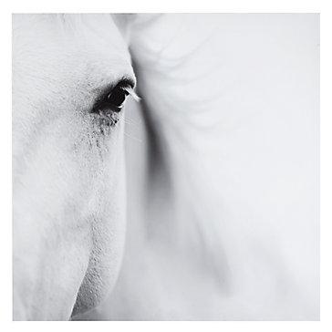 caballo-blanco-750329766