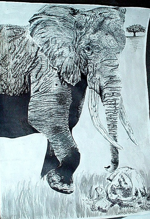 Elephant study pen & ink