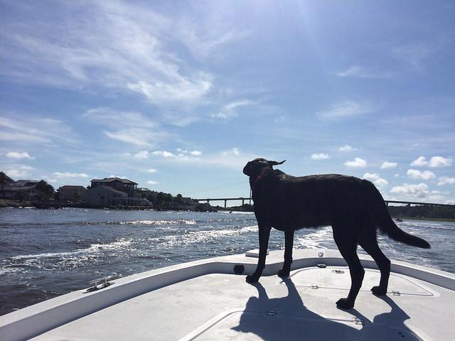 Happy sea dog is happy