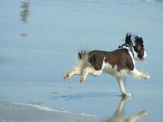 Taking Eliot to the beach