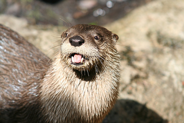 And otters...