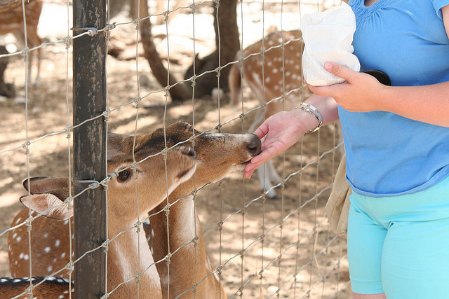 And feeding adorably small deer at the rescue zoo in Austin.