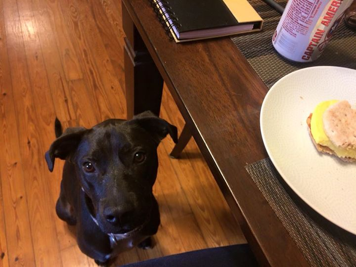 """Pascale wishes I would """"forget"""" to eat the rest of my breakfast"""
