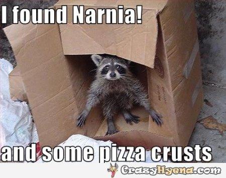 funny-raccoon-animal-pizza-crust-pic