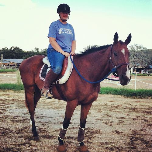 A Young Nerd Horse