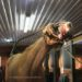 Horse Sex Offender List